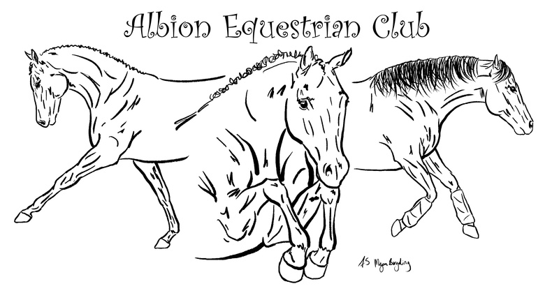 Albion Equestrian Club Forever Starbuck Portraits And